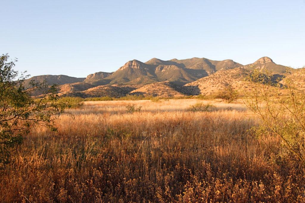 Morning in the Arizona desert